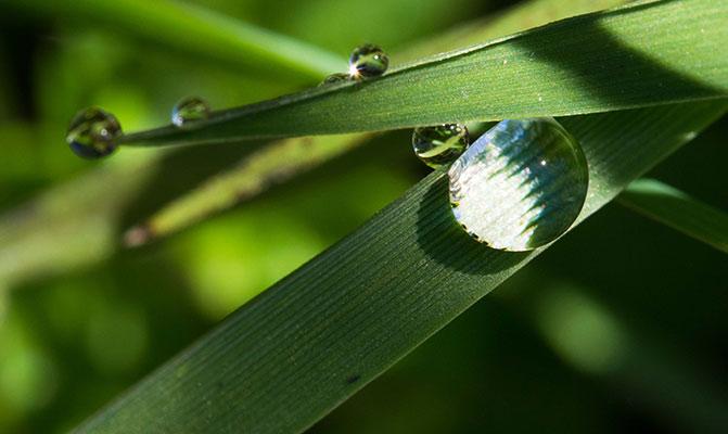 highland dew
